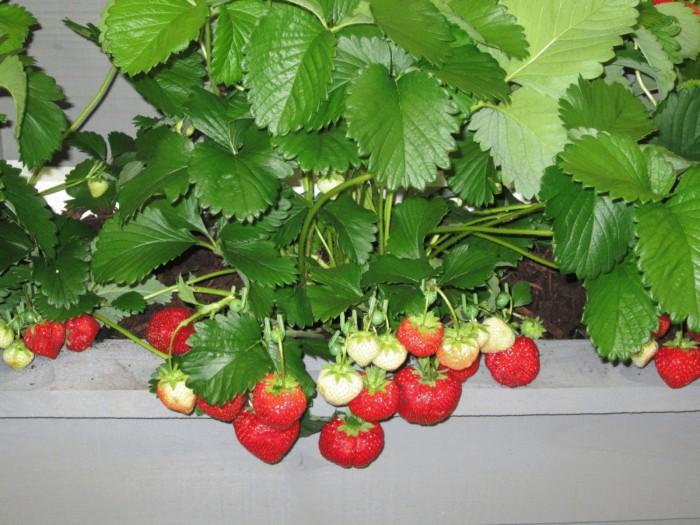 идеи огорода на балконе