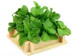 Как вырастить дома зелень